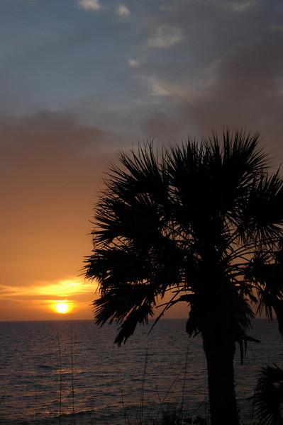 Florida Palm Sunset