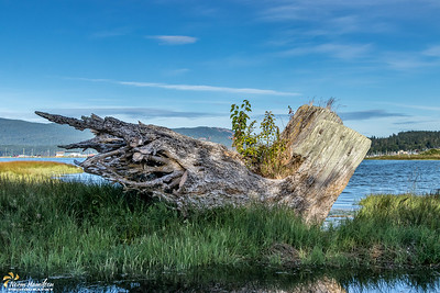 Driftwood at Cowichan River Estuary