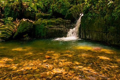 El Yunque Rain Forest - Puerto Rico