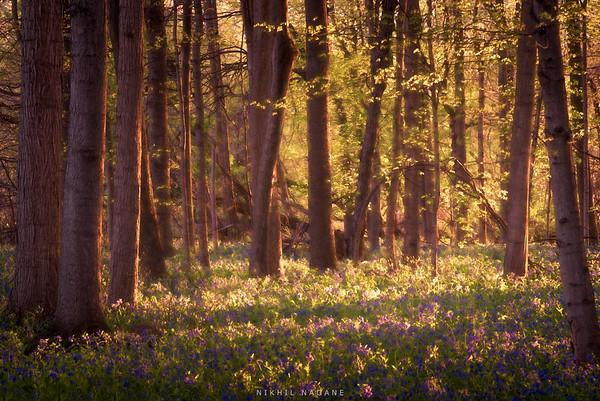 Forest Glow #2