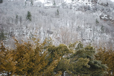 From cedars to ice...  Gatineau Park.