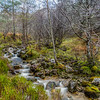 Woodland Burn at Loch Maree, Highland, Wester Ross, Scotland