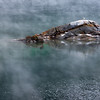 Gull, Rock, and Mist