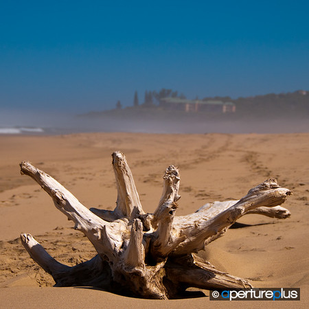 San Lameer Driftwood