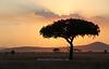 Sausage Tree sunset <br /> Serengeti National Park, Tanzania