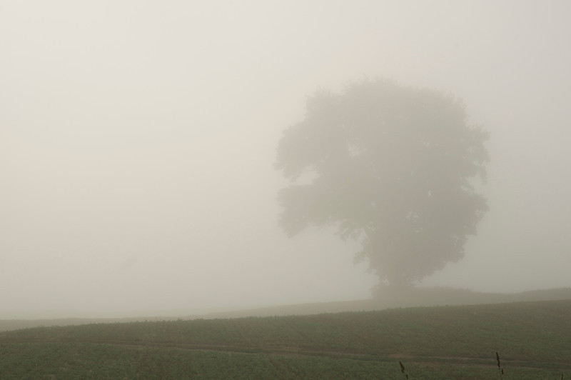 Michigan Tree in the Fog