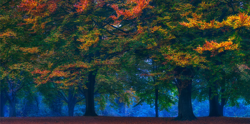 Autumn Path, Bristol, United Kingdom