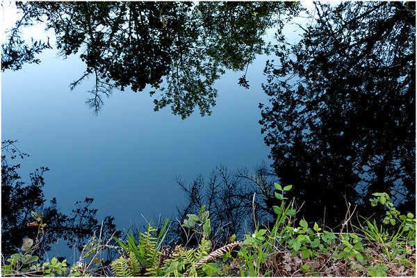 Pond Reflections, Camassia Nature Area