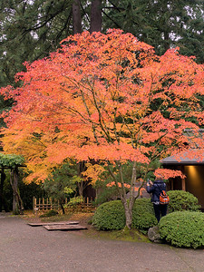 Fall Colors, Portland Japanese Garden