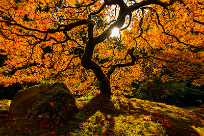 Fall Colors, Against the Sun