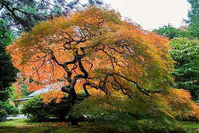Fall Colors, Portland Japanese Garden