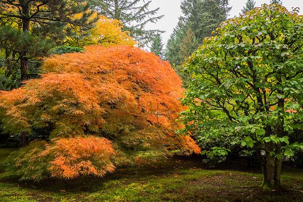 Diversity, Portland Japanese Garden