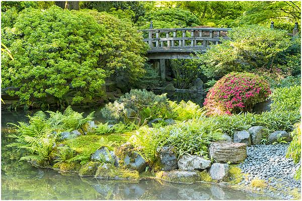 Portland Japanese - Strolling Pond - Garden