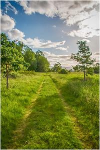 Grassy trails, Sauvie Oak Island, Portland