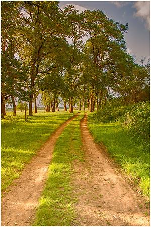 Nature Trail, Sauvie Oak Island