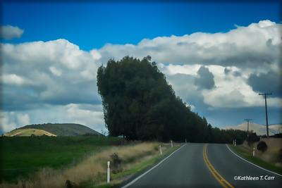 Runaway Hedge