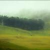 Pastures, Waimea