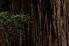 """The Redwood"""
