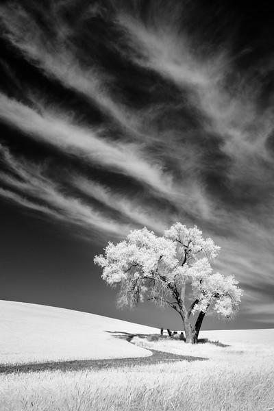 """Lone Tree #3"""