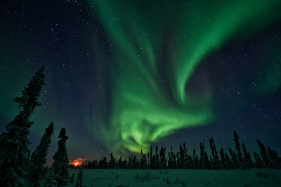 Aurora Borealis (northern lights) dance over the stunted boreal forest along the Dempster Highway near Eagle Plains, Yukon Territory, Canada. The orange glow of the moon adds counterbalance to the bright lights. Yukon Winter Scene.