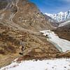 A hiker ascends from the summer grazing area of Langshisa Kharka. / Langtang Himal, Nepal