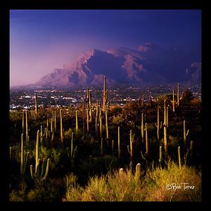 Catalinas and saguaros