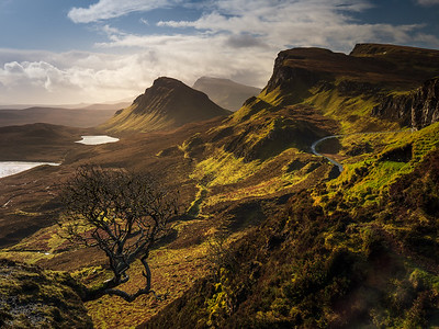 Trotternish Tree
