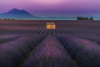 Lavender Immersion