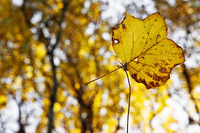 """""""Every leaf speaks bliss to me, fluttering from the autumn tree.""""  ~ Emily Bronte"""