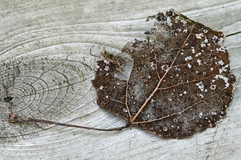 Decomposing Leaf 2