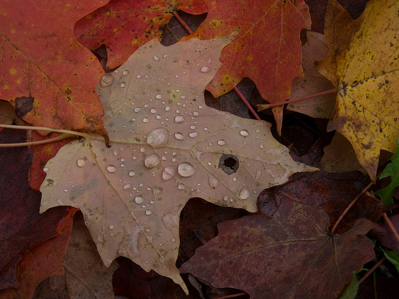 Leaves After the Rain
