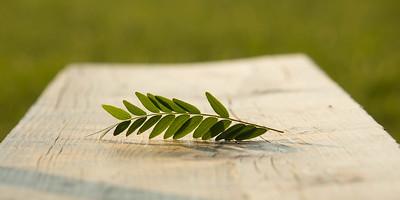leaf at rest
