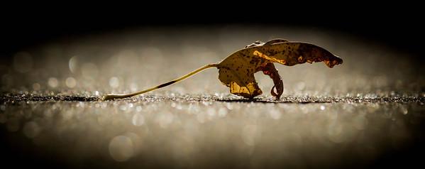 leaf, in the midst of sparkling light