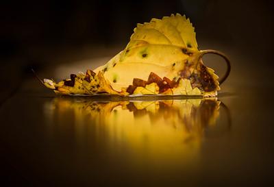 leaf, mirrored