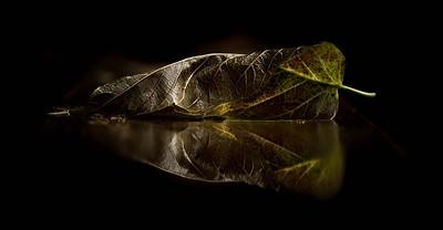 dark leaf, mirrored