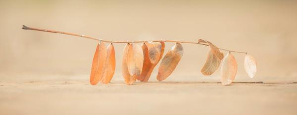 leaf, found in the balance