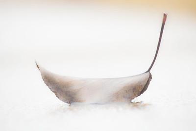 ethereal leaf