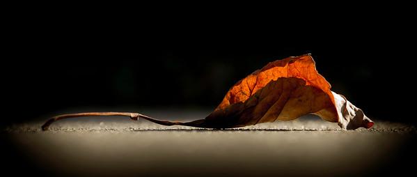 illuminated leaf at rest