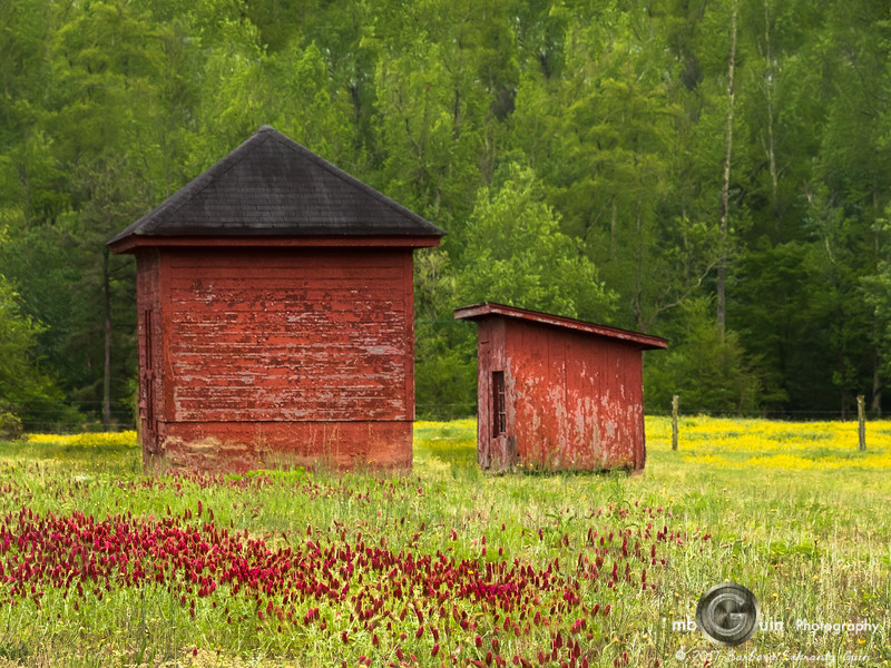Red Shed and Clover