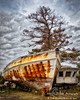"""Wooden Boat and Pine Tree"""