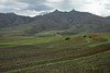 Corn fields of the Thaba Putsoa foothills - Maseru (district) - Lesotho.
