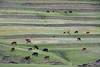 Sotho herdsmen along the grassy terraces - Maseru (district) - Lesotho.