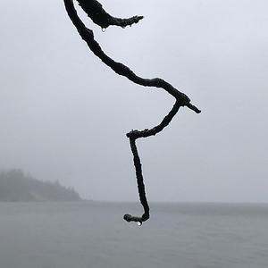 Branch with Raindrops, Nehalem Bay, 2020