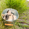 August 23, 2016 Bunnies on the Canal (2)