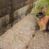 August 23, 2016 Bunnies on the Canal (20)