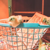 March 27, 2017 Chickens in the shop (5)