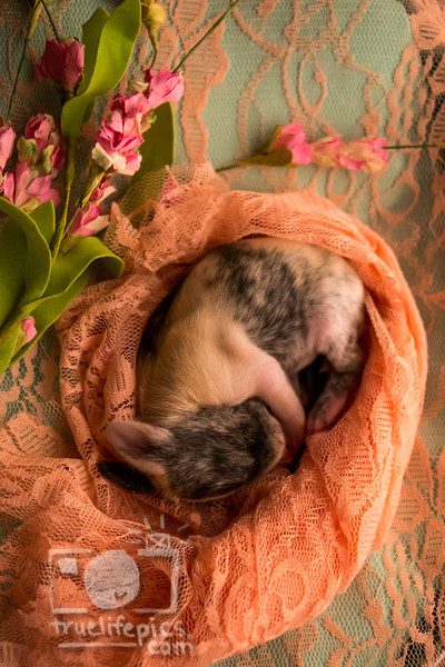 August 8, 2016 4 Day Old Bunnies(15)