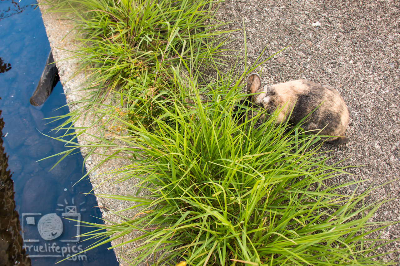 August 23, 2016 Bunnies on the Canal (27)