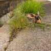 August 23, 2016 Bunnies on the Canal (19)
