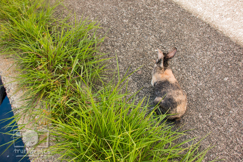 August 23, 2016 Bunnies on the Canal (26)